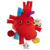 XL-Mikrobe Herz